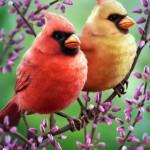 3d-zbrush-krakencmt-cardinals