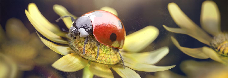 3d-c4d-zbrush-ps-ladybug-journey-nicolas-delille