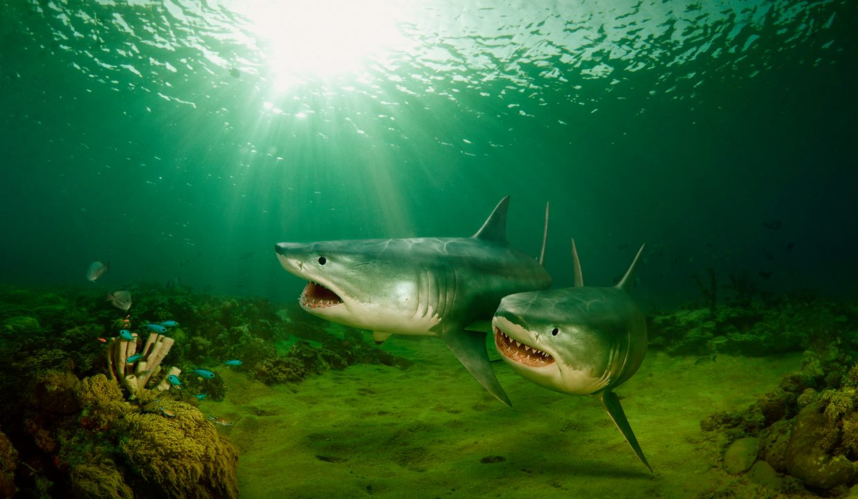 3d-maya-maxwell-render-hdrlight-photoshop-sharks-and-coral-reef-wieger-poutsma