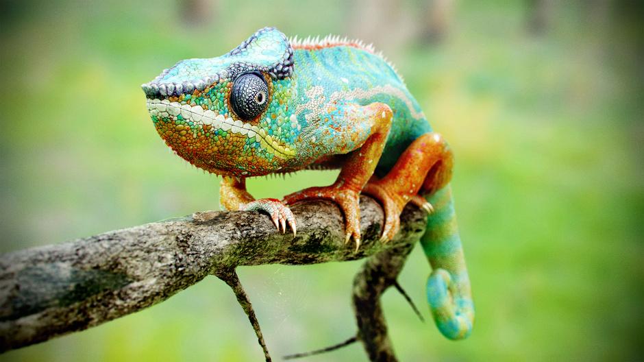 3d-autodesk-maya-mudbox-octane-render-photoshop-knald-chameleon-jonathan-vardstedt