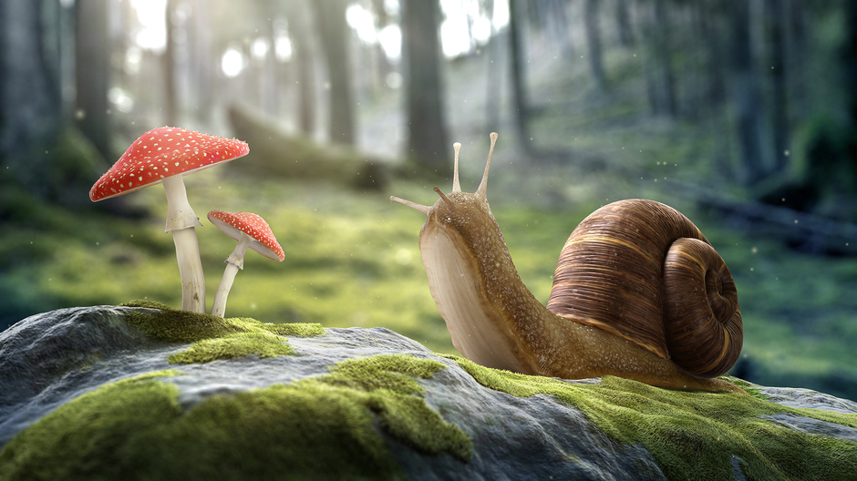 3d-maya-zbrush-photoshop-the-snail-rubio-matthieu